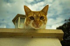 Jeune chat de gingembre Photographie stock libre de droits