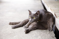Jeune chat gris Photo stock