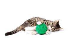 Jeune chat mignon Photographie stock