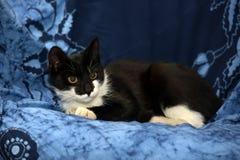 Jeune chat noir et blanc Photographie stock