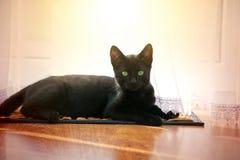 Jeune chat noir mignon Photographie stock libre de droits