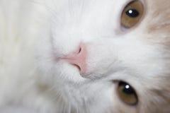 Jeune chat rouge Image libre de droits