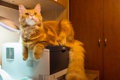 Jeune chat rouge de race de Maine Coon se reposant sur l'imprimante et le wat image libre de droits