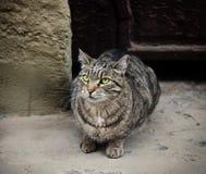 Jeune chat sans abri Photos stock