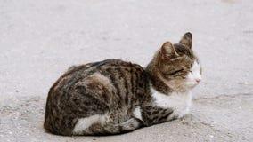 Jeune chat sans abri se reposant sur la surface d'asphalte de la rue banque de vidéos