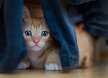 Jeune chat se cachant dans des pantalons photo libre de droits
