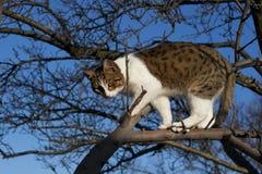 Jeune chat sur l'arbre Photo stock