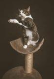Jeune chat tigré espiègle vigilant avec le coffre blanc se reposant sur rayer le courrier sur le fond foncé de tissu Image stock