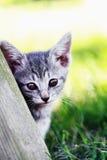 Jeune chaton photographie stock libre de droits
