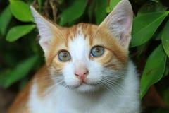 Jeune chaton Photos stock