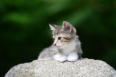 Jeune chaton adorable Images libres de droits