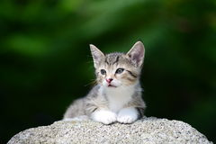 Jeune chaton adorable Photo stock
