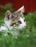 Jeune chaton dans une herbe Images stock