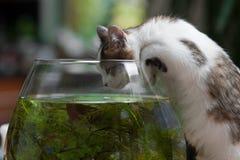Jeune chaton mignon et une cuvette de poissons Photos libres de droits