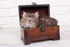 Jeune chaton pelucheux glissant dans le coffre Images libres de droits