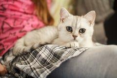 Jeune chaton sur le recouvrement d'une fille photo stock