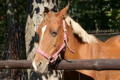 Jeune cheval Photographie stock