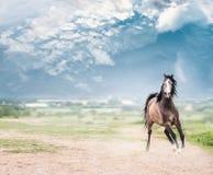 Jeune cheval Arabe d'étalon fonctionnant en avant au-dessus du fond de nature et de ciel Images libres de droits