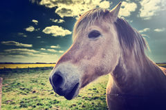 Jeune cheval au champ vert Image stock