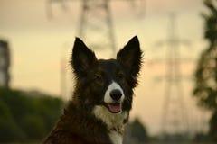 Jeune chien énergique sur une promenade Éducation de chiots, cynology, formation intensive de jeunes chiens Crabots de marche en  images libres de droits