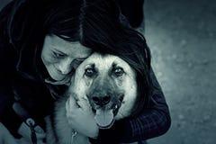 Jeune chien de loup Photo stock
