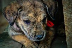 Jeune chien de rue regardant vers le bas images stock