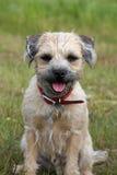 Jeune chien terrier de cadre Images stock