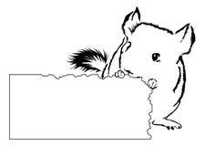 Jeune chinchilla grignotant sur le carton Photo stock