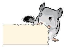 Jeune chinchilla grignotant sur le carton Images stock