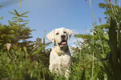 Jeune chiot mignon de petit chien dans le domaine vert images libres de droits
