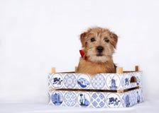 Jeune chiot se reposant dans une caisse en bois Photo stock