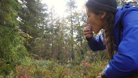 Jeune cueillette de fille de randonneur et myrtilles de consommation dans la forêt 4k d'automne au ralenti banque de vidéos