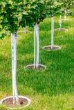 Jeune d'arbre de plantation fin  Image stock