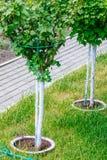 Jeune d'arbre de plantation fin  Photographie stock