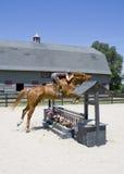 Jeune dame branchant un cheval Image libre de droits
