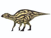 Jeune de jeunes de dinosaure de Maiasaurus photos stock