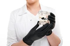 Jeune dentiste féminin jugeant le modèle dentaire de mâchoire d'isolement dessus photo libre de droits