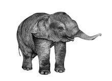 Jeune dessin d'éléphant de crayon Images stock