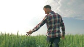 Jeune exploitant agricole appr?ciant la beaut? des champs tout en marchant par une plantation verte d'orge sur le fond du ciel bl banque de vidéos