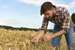 Jeune exploitant agricole inspectant la culture Images libres de droits