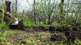 Jeune exploitant agricole Man Digs Ground avec la vieille pelle sale dans le jardin Laps de temps banque de vidéos