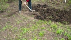 Jeune exploitant agricole Man Digs Ground avec la vieille pelle sale dans le jardin Laps de temps clips vidéos