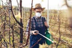 Jeune exploitant agricole pulv?risant les arbres avec des produits chimiques dans le verger image stock