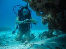 Jeune femelle sur le fond sous-marin montrant le signal d'amour à une petite pâtée Image stock