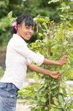 Jeune femme africaine cassant une branche d'un petit arbre images libres de droits