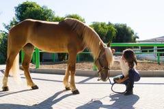 Jeune femme attirante toilettant un cheval au Photo libre de droits