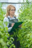 Jeune femme au travail en serre chaude Produit de serre chaude Production alimentaire images libres de droits