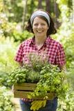 Jeune femme avec des herbes dans a Photo stock