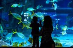 Jeune femme avec la montre d'enfant un poisson dans l'aquarium Image libre de droits