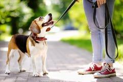Jeune femme avec le chien de briquet en parc Images stock